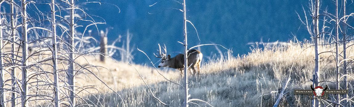 Montana Hunting Company homepage